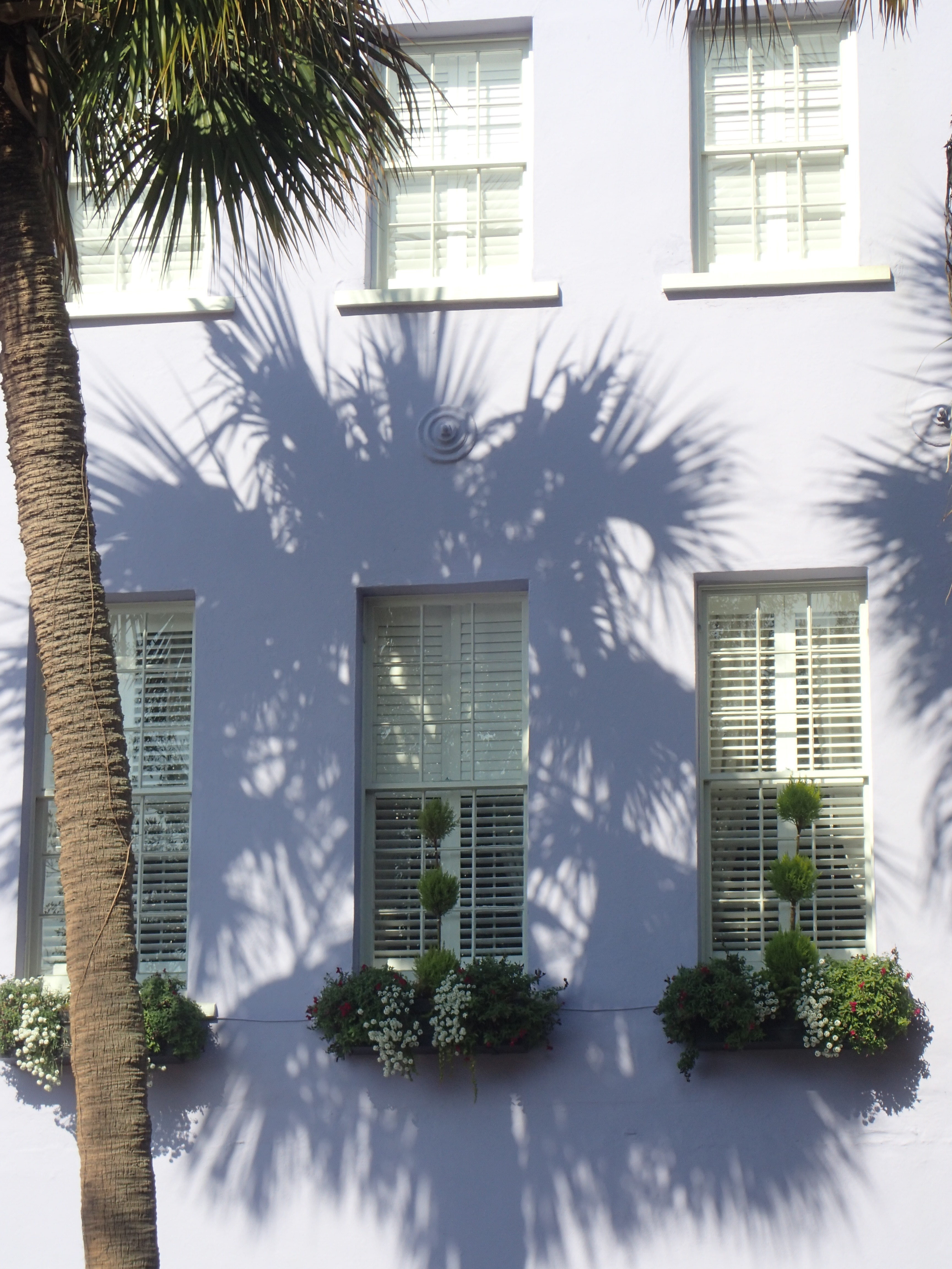 Palm Tree Reflection on Purple Rainbow Row House