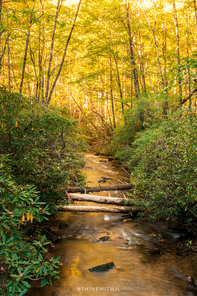 yellow leaves surrounding moving waterfall with fallen trees