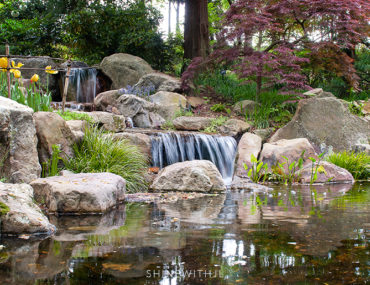 unc charlotte botanical gardens waterfall