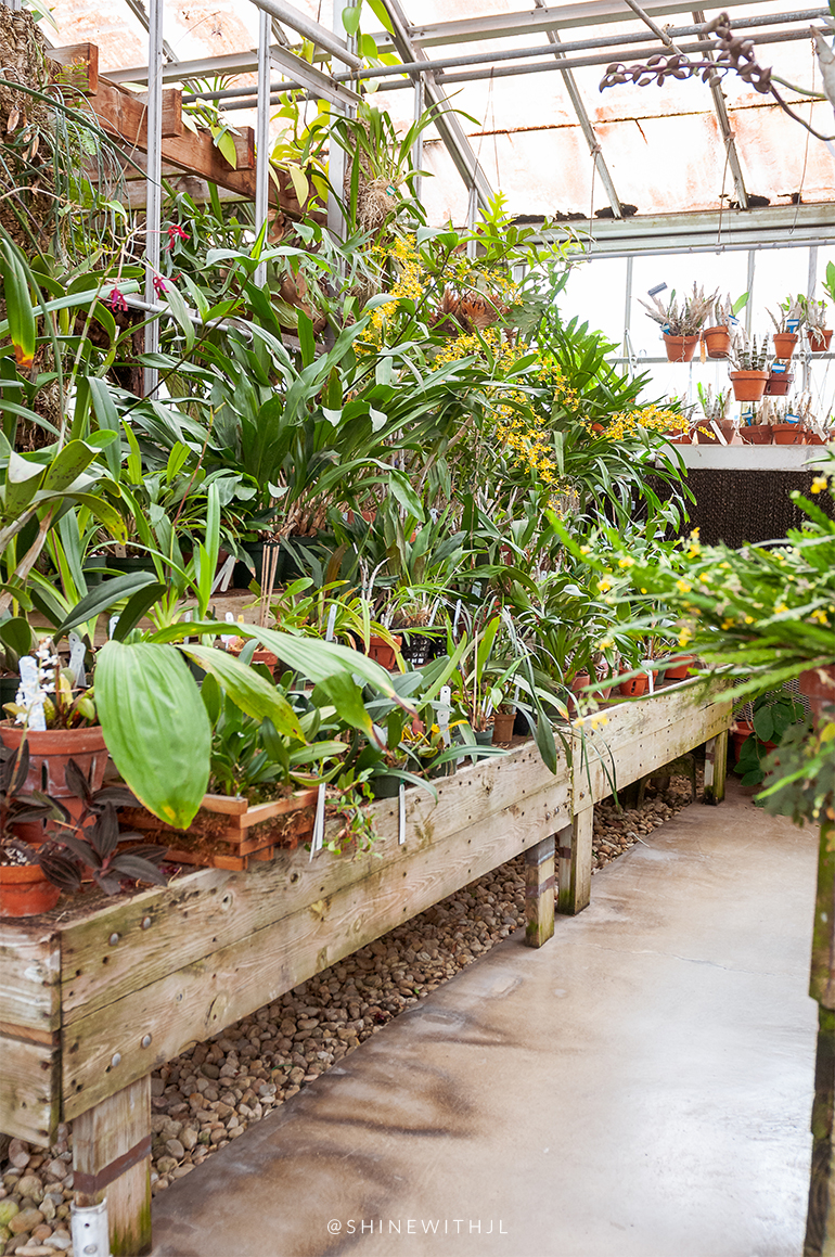 greenhouse plants in clay pots