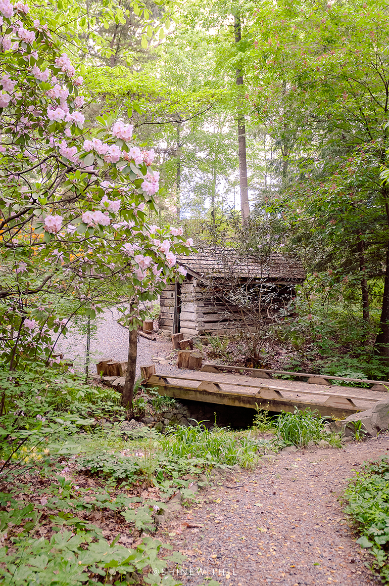 log cabin and pink rhododendrons things to do charlotte