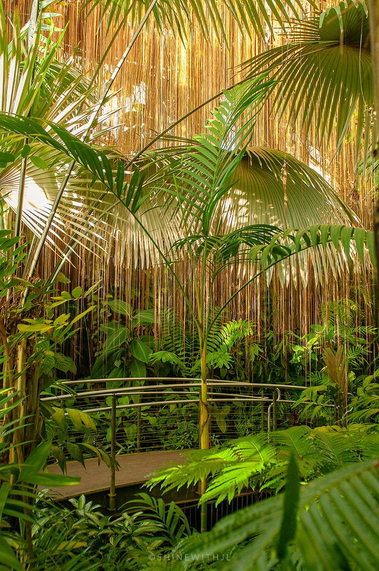palm fronds and greenery fuqua conservatory atlanta