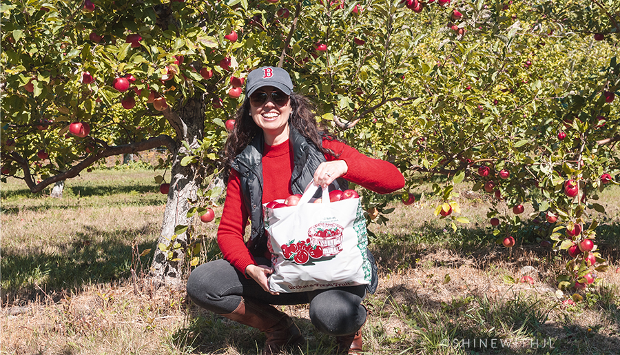 Pick Your Own Apples NH 2020
