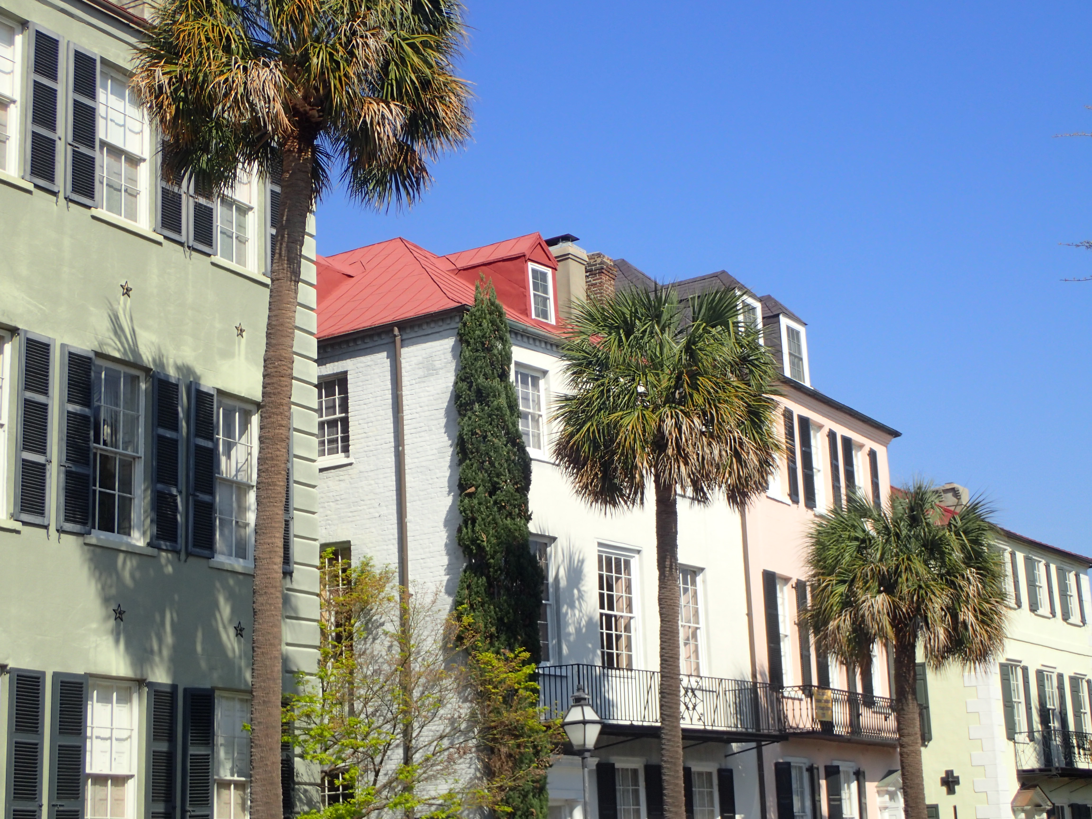 Palm Trees Along Charleston SC Streets