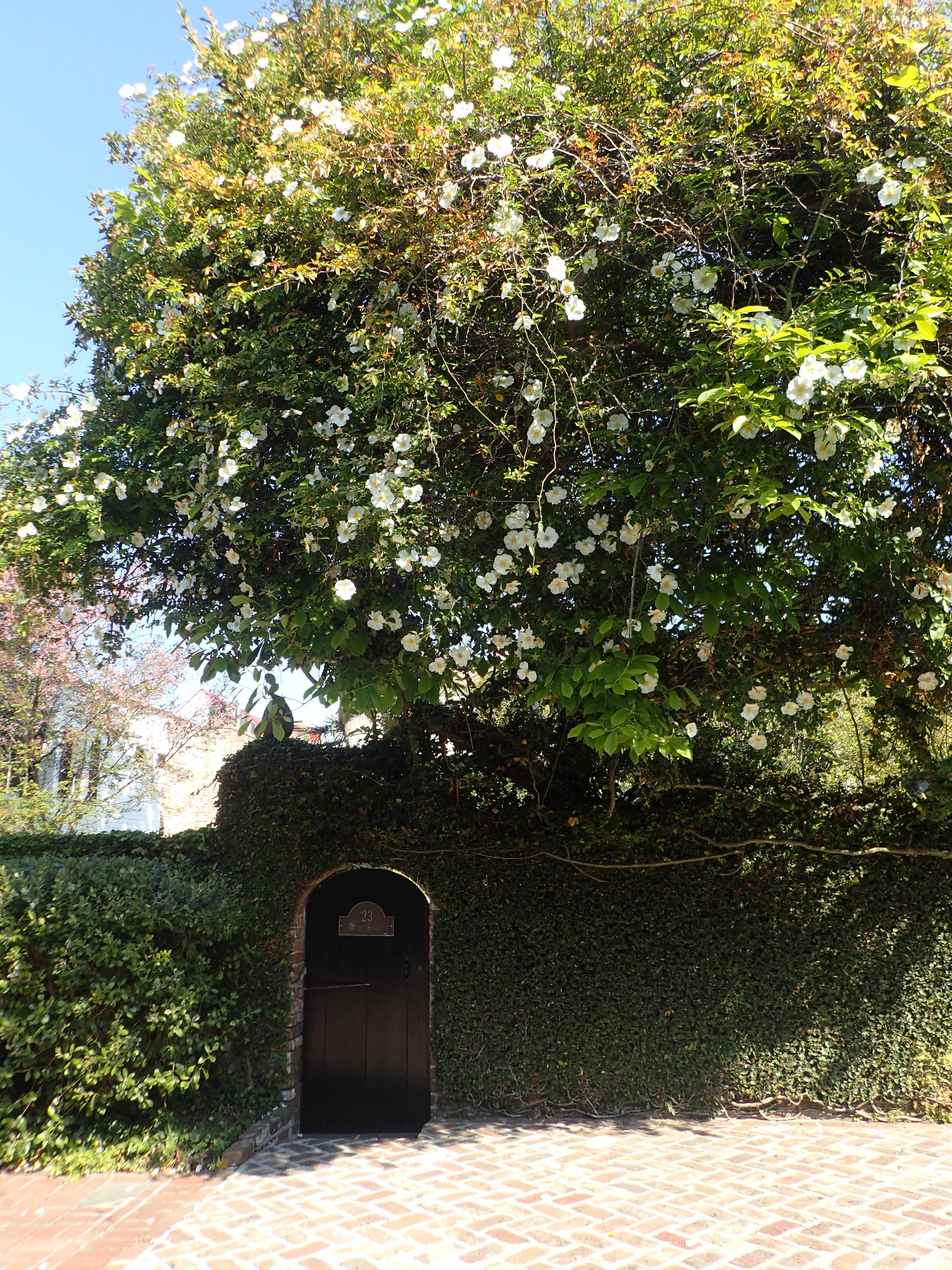 Flowering Tree Over Entry Door Charleston SC