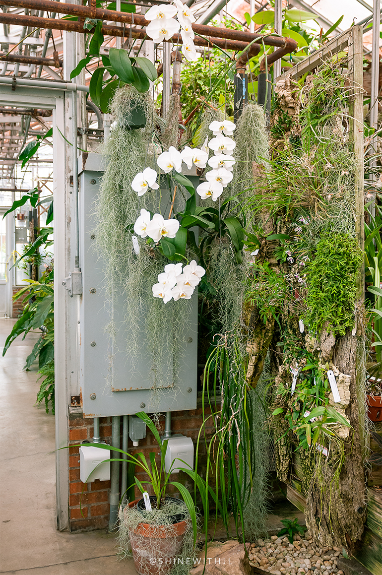 white orchids and hanging plants