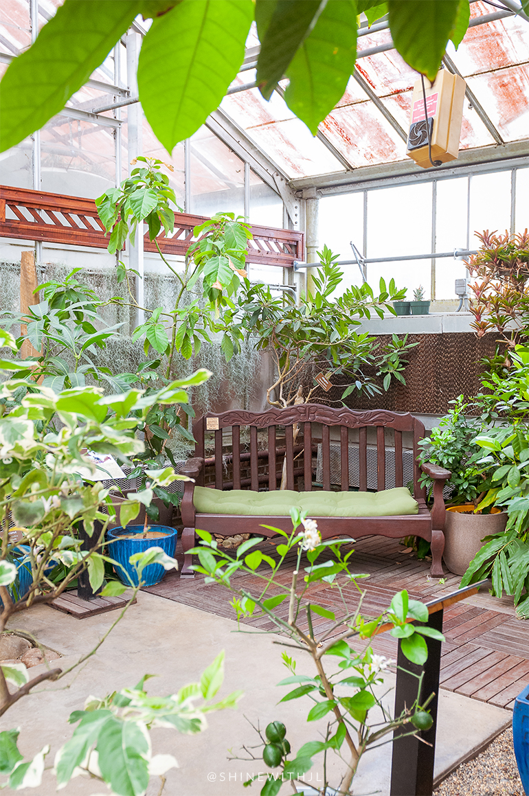 wooden bench in greenhouse charlotte