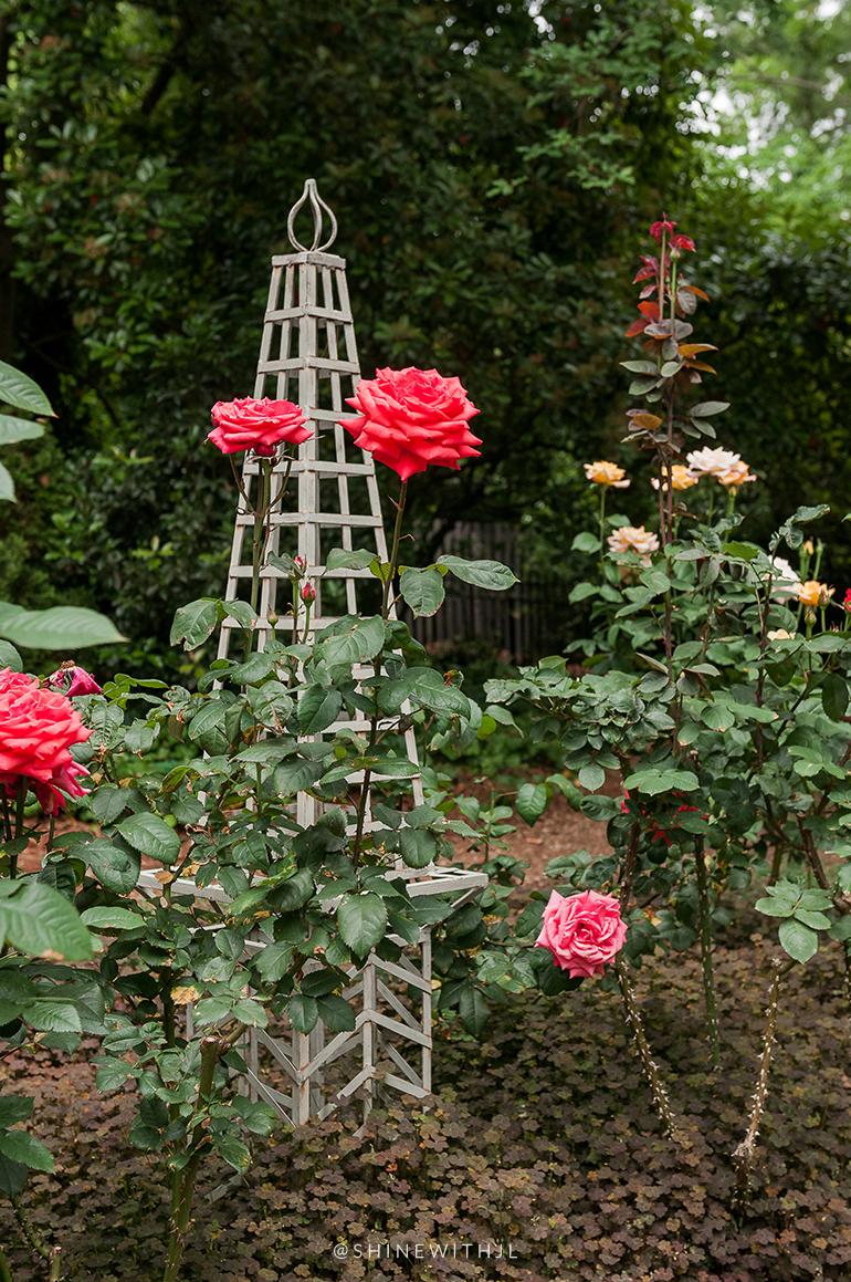 southern rose garden duke mansion charlotte nc