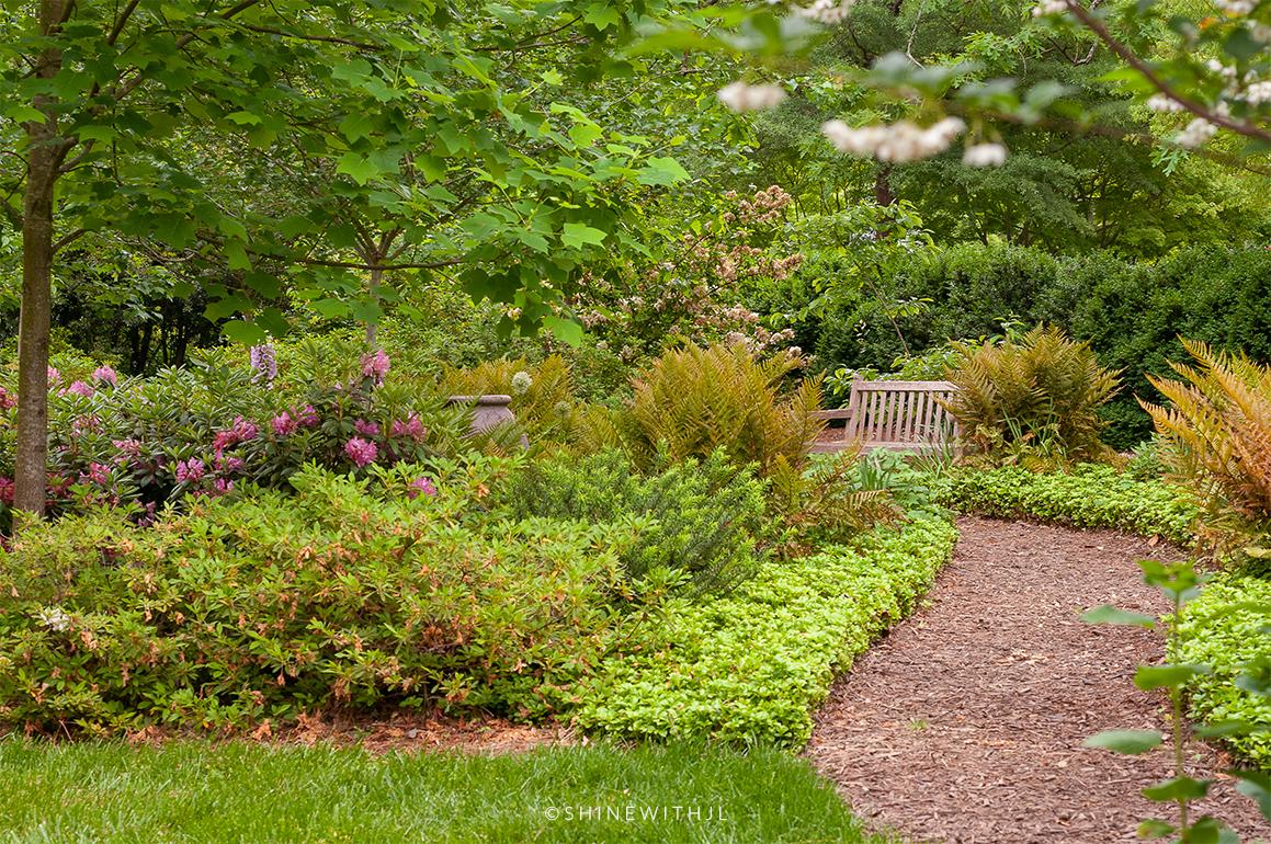 spring greenery ferns duke mansion garden clt