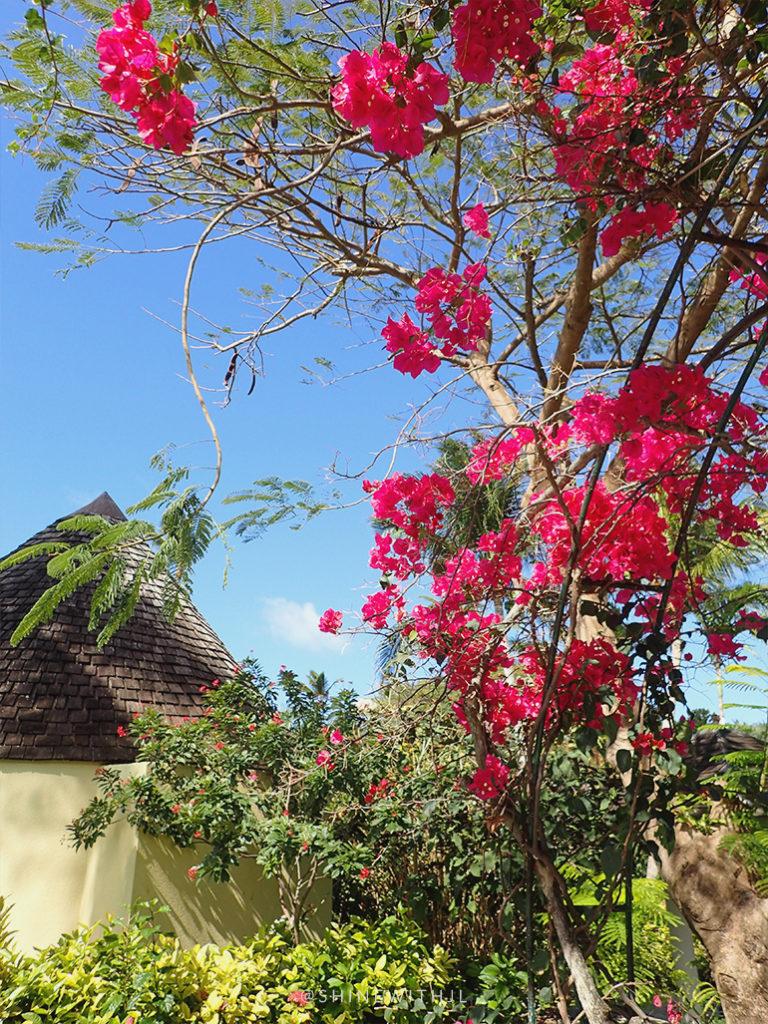 tropical flowers at sandals grande antigua