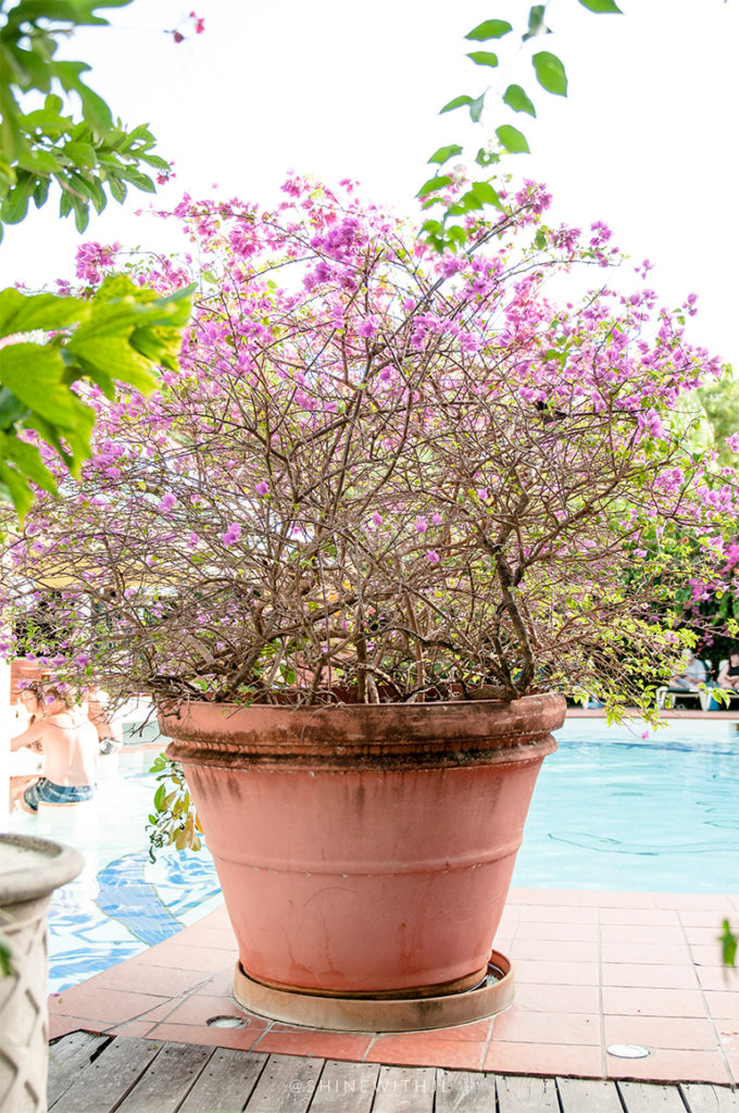 large purple potted plant at sandals antigua