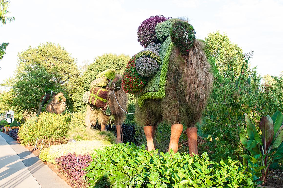 camels sculpture mosaiculture atlanta botanical gardens