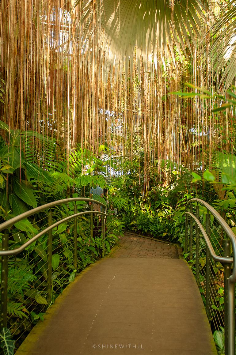 bridge inside conservatory atlanta botanical gardens