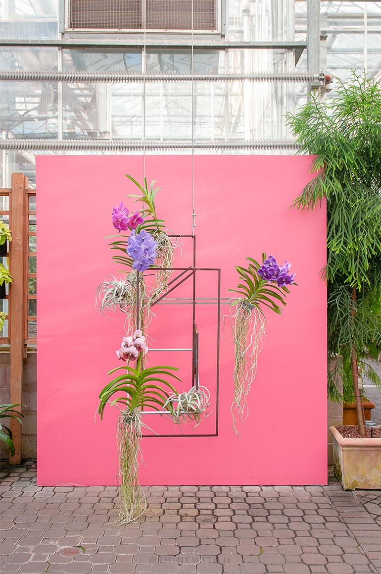 insta-worth spots atlanta geometric orchid backdrop botanical gardens
