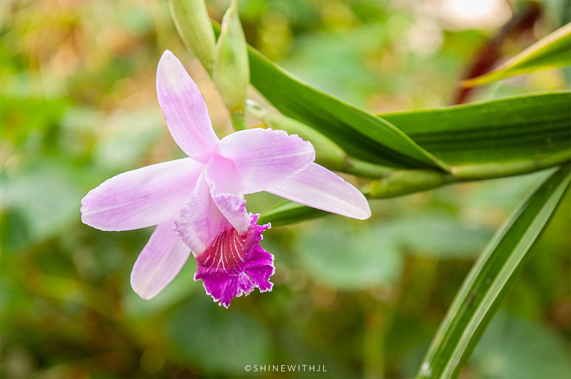 orchid at bontanical gardens atlanta