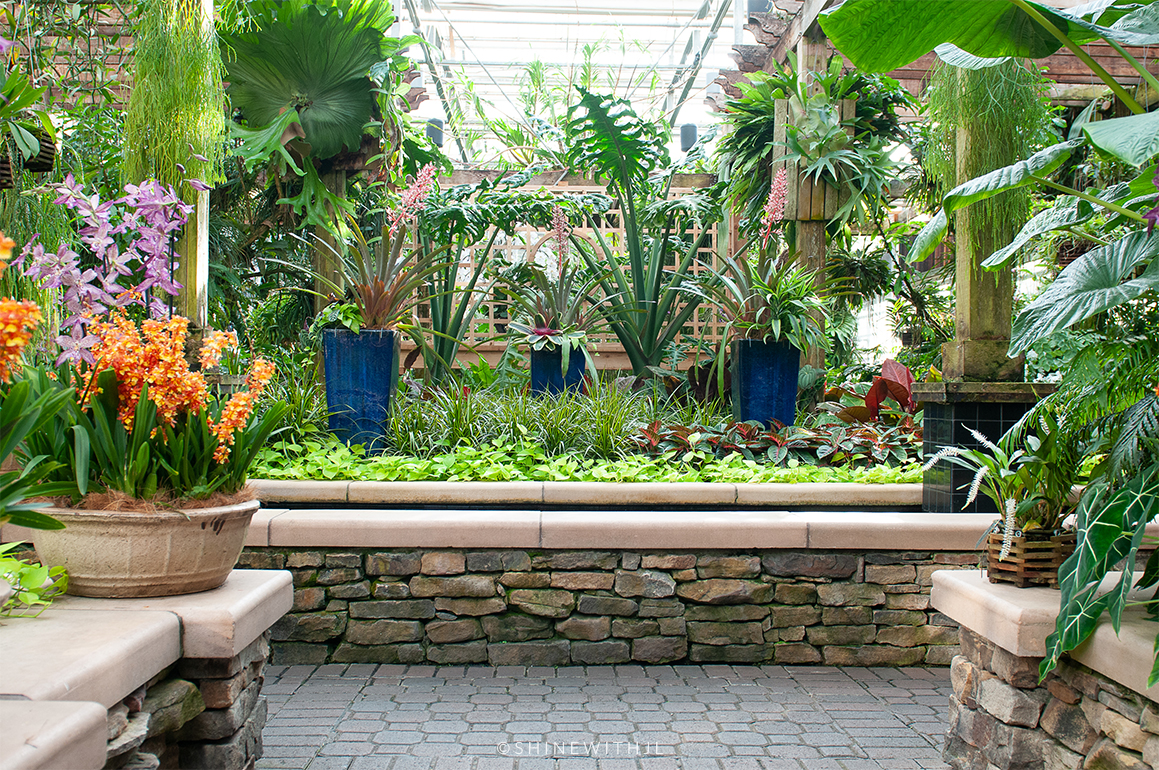 orchid center at atlanta botanical gardens