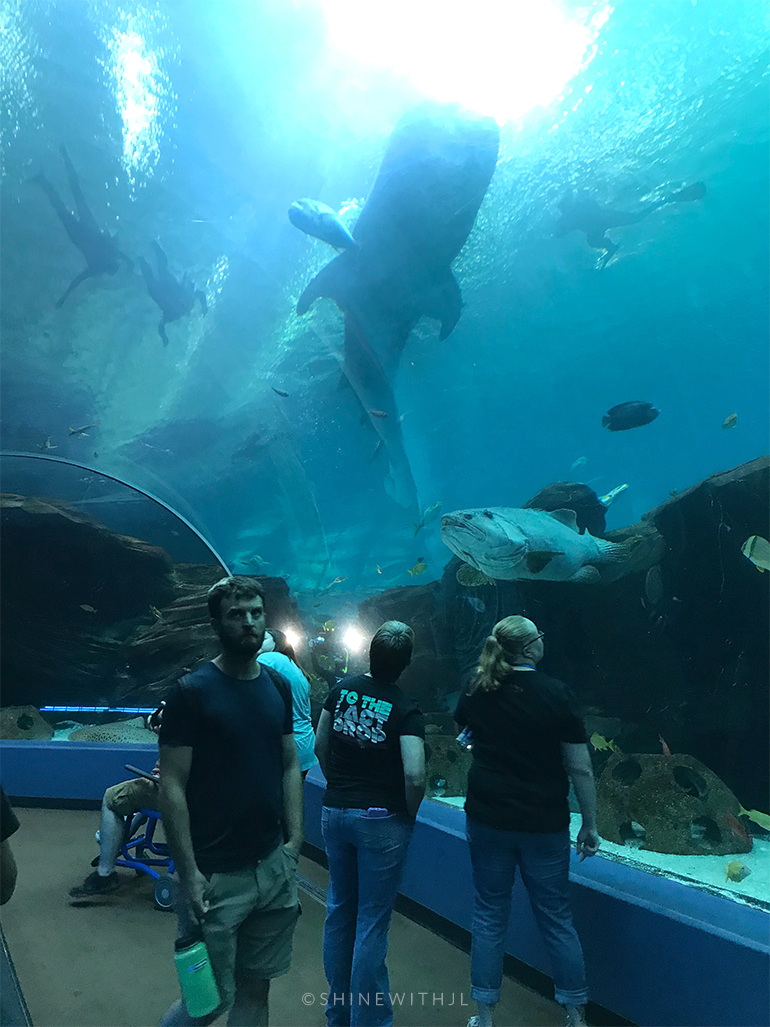 scuba divers with whale shark viewing from underwater tunnel georgia aquarium
