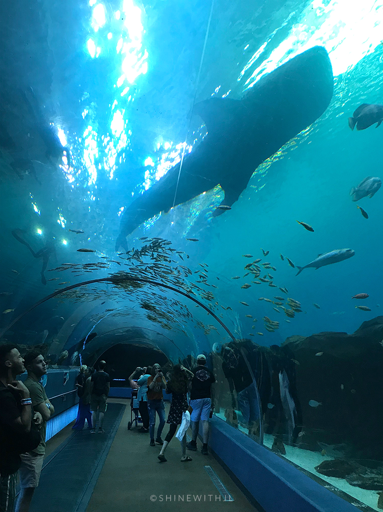 underwater tunnel scuba diving with whale sharks aquarium
