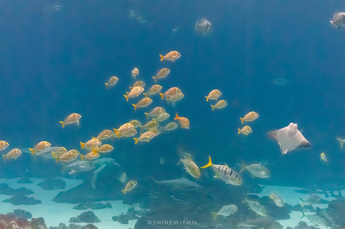 yellow fish swimming at georgia aquarium
