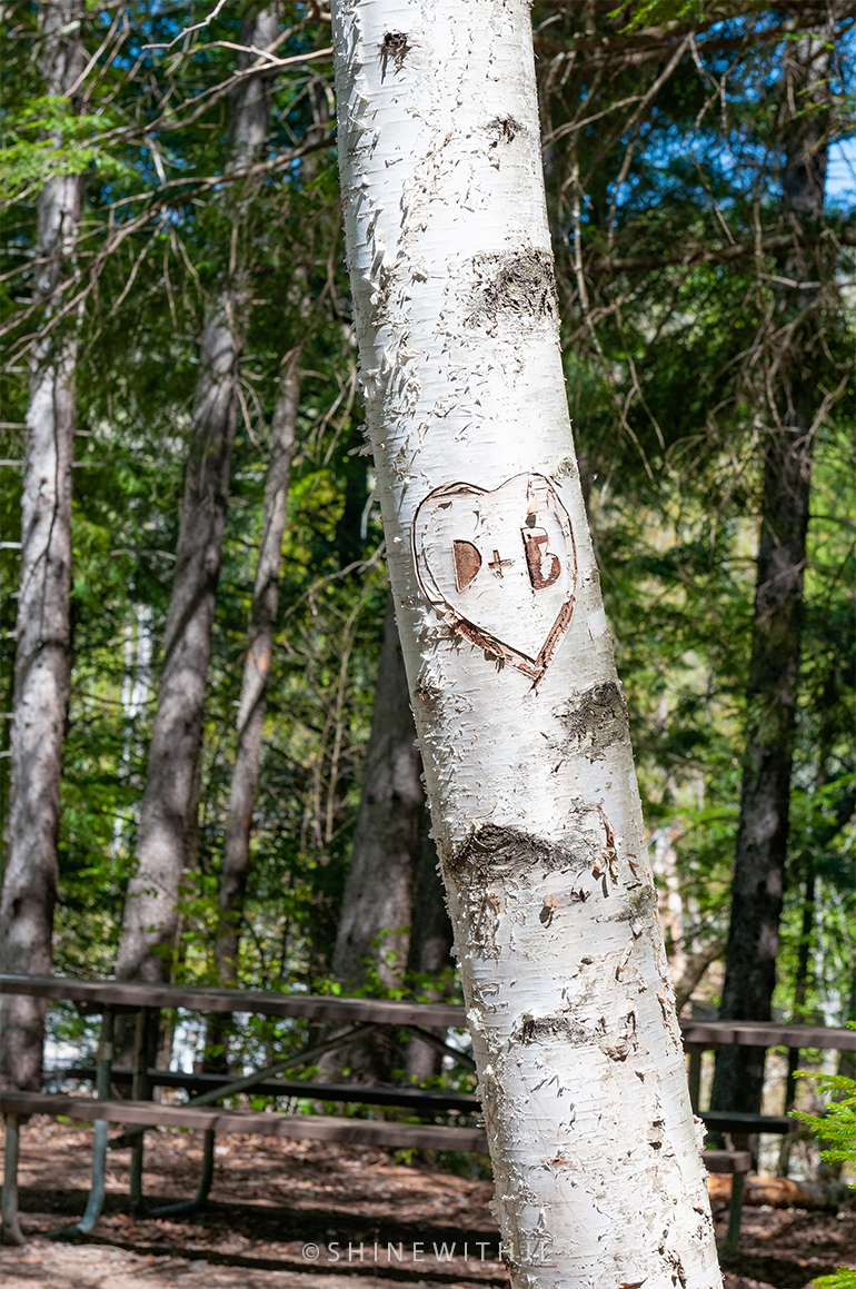 initials carved into birch tree