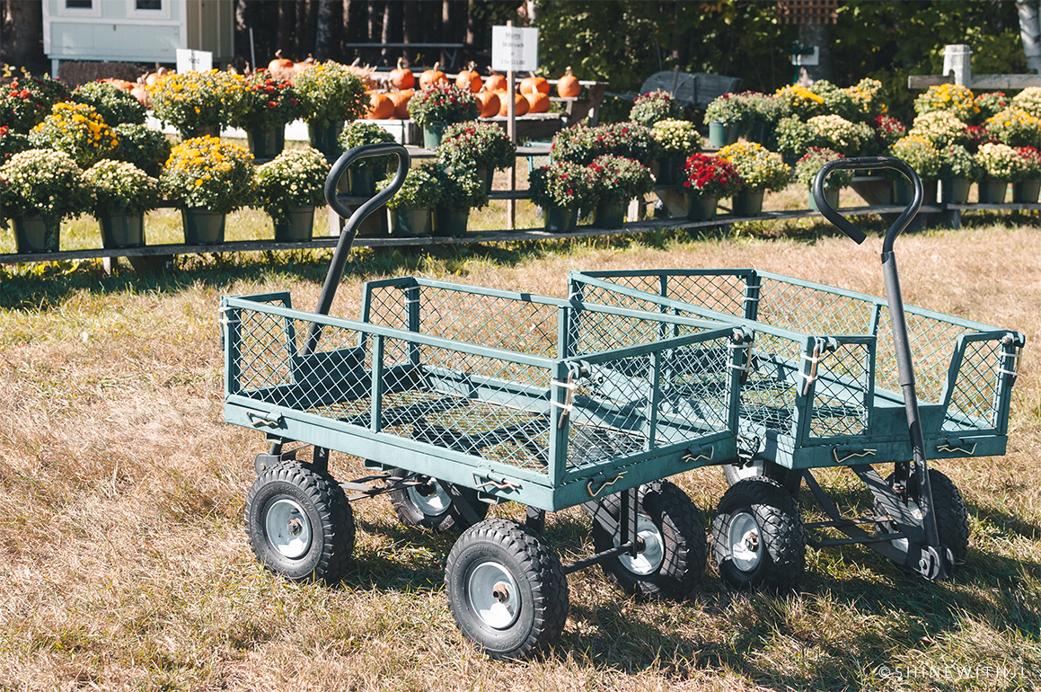 pick-your-own-apples-carts-gilford-nh