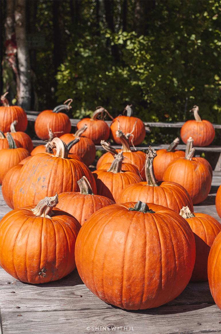 pumpkins for sale gilford nh farm