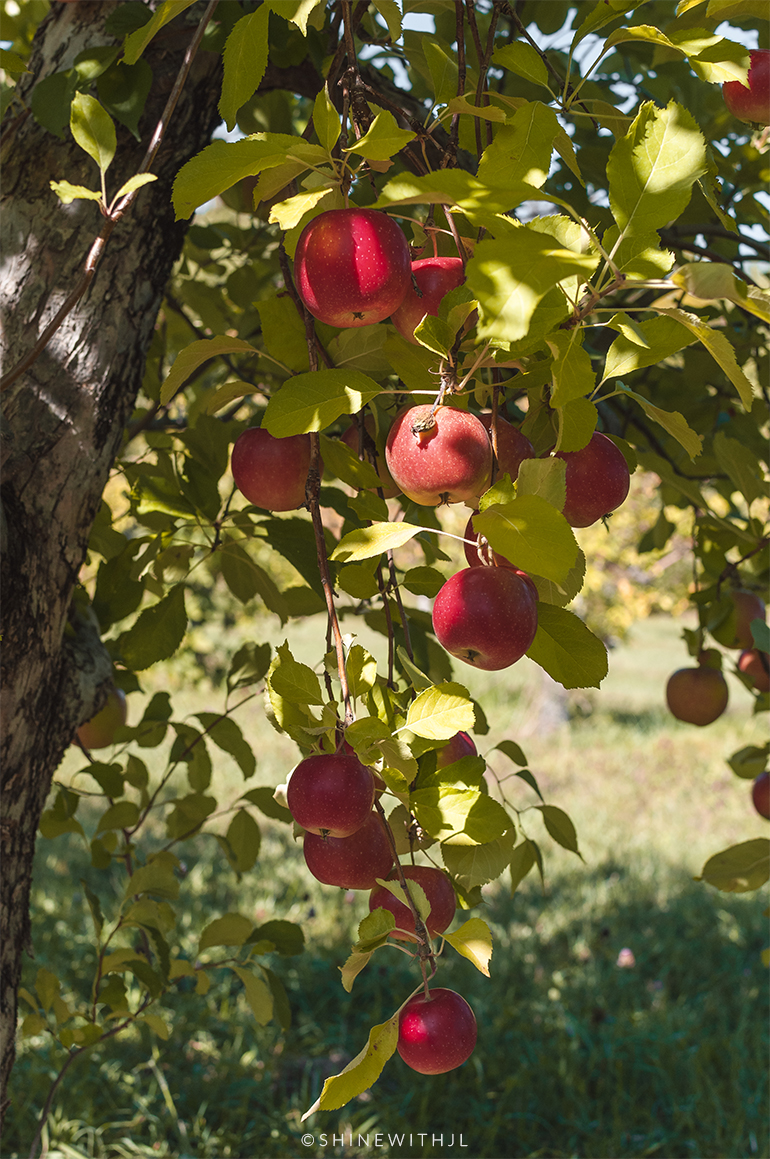 apple orchard gilford new hampshire